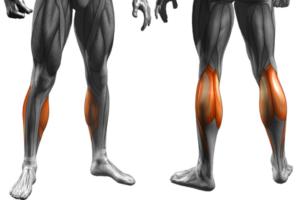 ふくらはぎ筋肉痛の種類